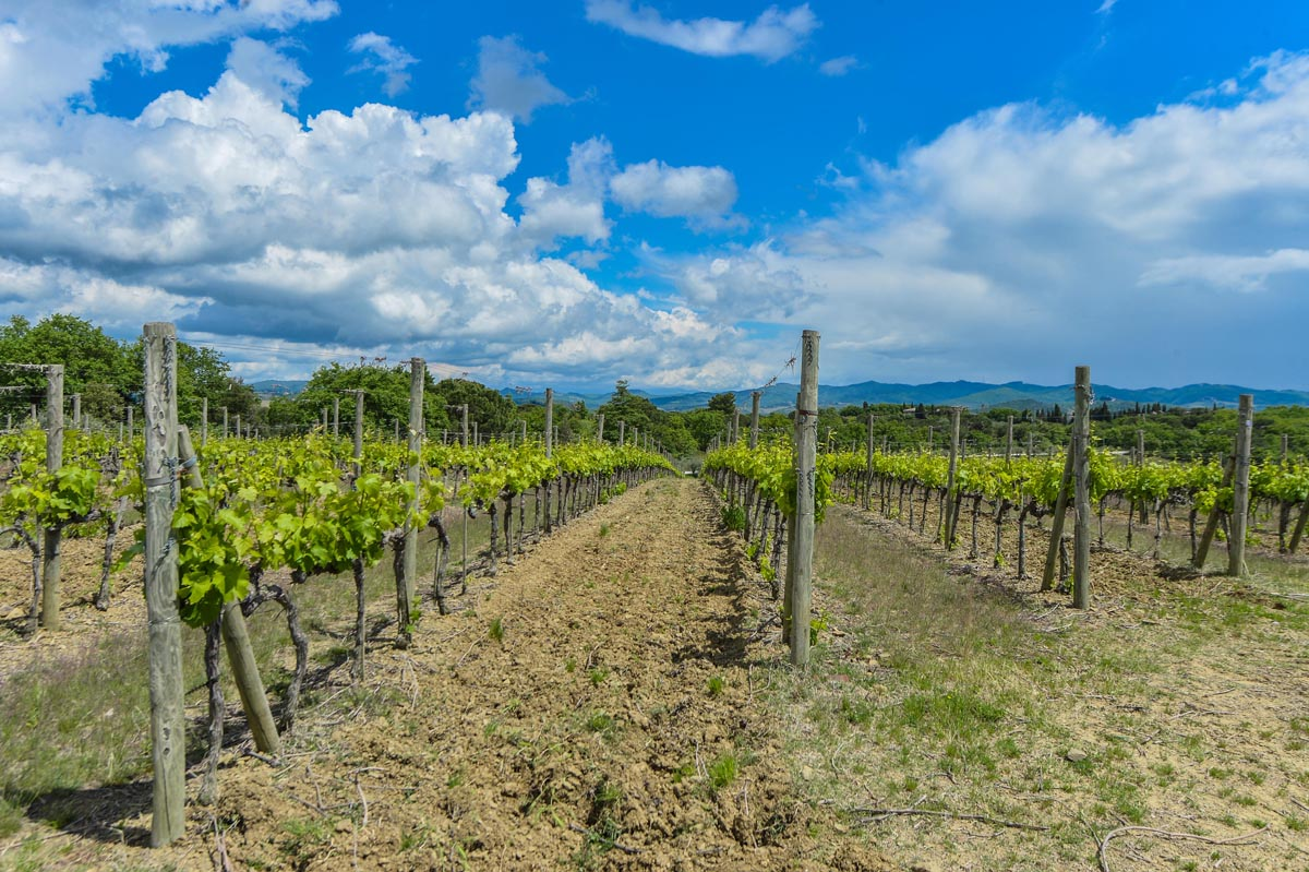 Vineyards & wineries in Tuscany